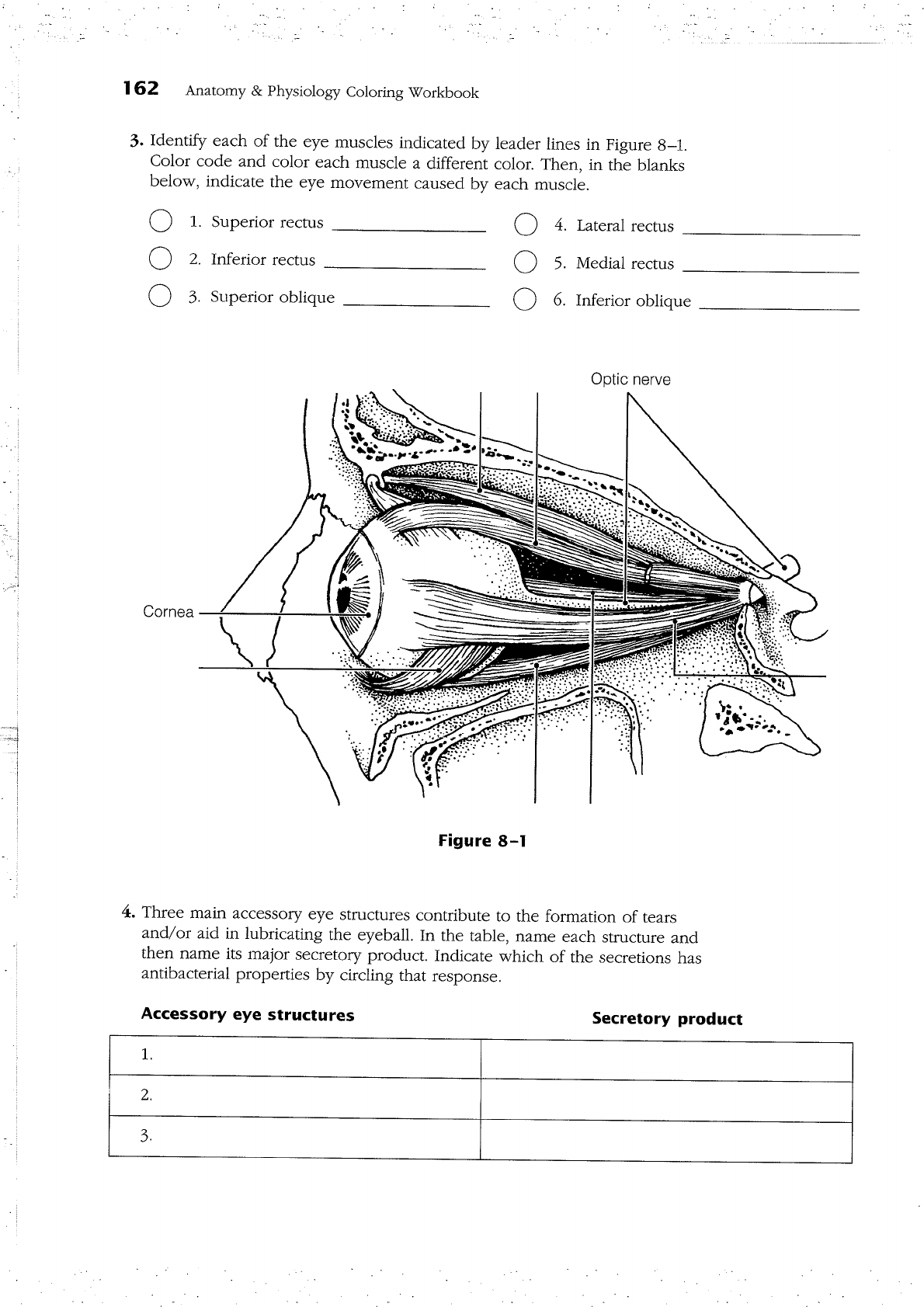 Anatomy And Physiology Coloring Workbook Answers Chapter 7 ...